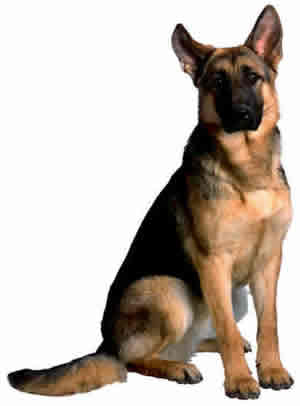 homeowners insurance allowing dogs