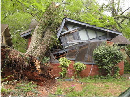 Tree Fell on House During Storm Home Insurance Coverage